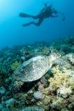 Photographe sous-marin avec la tortue photographie stock