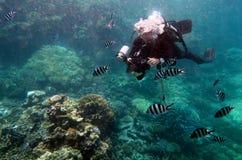 Photographe sous-marin photographiant sous l'eau Image libre de droits