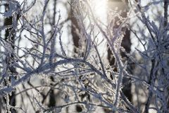 Hoarfrost on the branches of a tree Royalty Free Stock Images