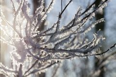 Hoarfrost on the branches of a tree Royalty Free Stock Photo