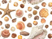 Photographed collection of different shells on white background. Seamless photograph to be repeated endlessly. Great for printed wallpaper, fabric, wrapping Royalty Free Stock Image