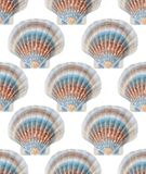 Photographed colorful shells on white background. Seamless photograph to be repeated endlessly. Great for printed wallpaper, fabric, wrapping paper Royalty Free Stock Photos
