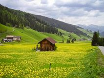 Barn in a field of dandelions in the Dolomites, Italy stock photos