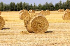 Golden straw bale. Photographed lying on the field stacks of golden straw bale. focus on front stacks, rear pan out of focus Royalty Free Stock Photos