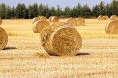 Golden straw bale Royalty Free Stock Photos