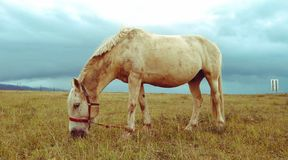 Prairie horse stock photos