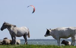 Photographed in the summer of 2018 on the lake Chebakul. Paragliders fly over the lake, a herd of horses, sheep and cows graze on
