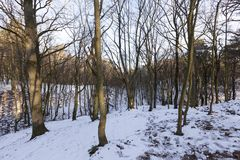 Deciduous trees in winter. Photographed on a sunny day of deciduous trees in the forest in the winter season. Blue sky in the background Royalty Free Stock Photos