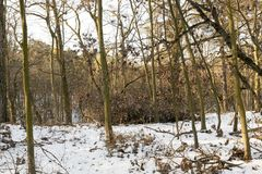 Deciduous trees in winter Royalty Free Stock Images