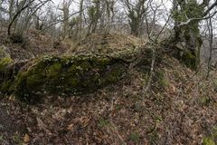 Trunk of fallen tree in an oak forest. Photographed with wide angle royalty free stock photography