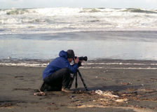 Photographer. Man taking pictures of shorebirds at ocean stock image
