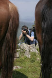 Photographer in action. Behind two horses backs stock image