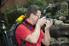 Photographer with bird on the shoulder Stock Photos