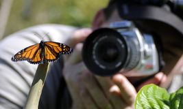 Photographer and butterfly Royalty Free Stock Images