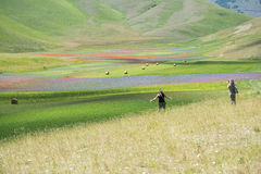 Photographer in Castelluccio Stock Photography