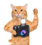 Photographer cat. Stock Image