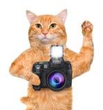 Photographer cat. Stock Image