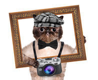Photographer cat Royalty Free Stock Image