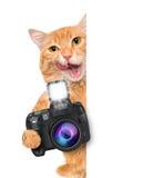 Photographer cat. Royalty Free Stock Photo