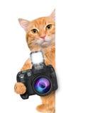 Photographer cat Royalty Free Stock Image