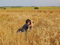 Photographer in cornfield. Young male photographer taking photos in the cornfield royalty free stock image