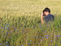 Photographer in cornfield Stock Image