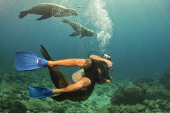 Photographer Diver approaching sea lion family underwater Stock Photos