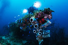 Photographer diver scuba take a photo or video near ocean reef. Royalty Free Stock Image