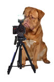 Photographer dog with camera.  stock image