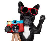 Photographer dog camera. Cool tourist photographer dog taking a snapshot or picture with a retro old camera gesturing to say cheese , isolated on white royalty free stock photo