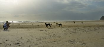 Photographer, Dogs and the Beach stock photos