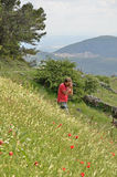 Photographer on the flowering slope Stock Photography