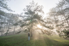 The photographer in foggy, Sunrise in the forest , rays and beautyful lights Royalty Free Stock Images