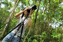 Photographer in forest Stock Photos