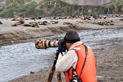 Photographer and fur seals Royalty Free Stock Photos