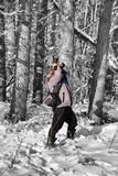 Photographer in a ghostly forest photographs something on a tree. Photographer in a ghostly forest photographs something at the top royalty free stock image