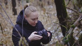 The photographer the girl walks on an autumn wood and takes pictures of the nature. first snow. cinematic shot. slow. Motion traveler stock footage