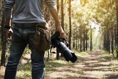 Photographer holding camera in the pine tree forest. During journey Royalty Free Stock Photos