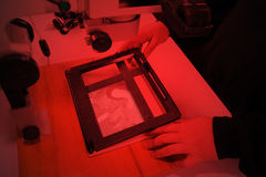 Photographer in the laboratory with  enlarger projects the image from a negative on photo paper Stock Photography