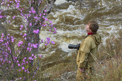 Photographer looking with wonder on a rhododendron bush. In Altai Stock Images