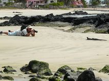 A photographer and a marine iguana. A photographer lying on the beach taking a photo of a marine iguana on the Galapagos Islands, Ecuador stock image