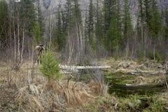 Photographer near a geyser lake Stock Photography