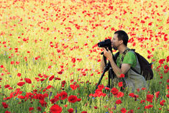 Photographer in poppy field. Photographer with camera on tripod surrounded by poppy field Royalty Free Stock Photography