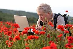 Photographer in poppy field. Photographer searching on laptop in poppy field royalty free stock images