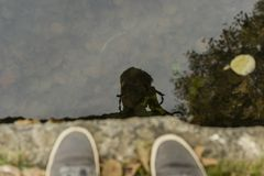 Photographer reflected on the surface of a shallow water Stock Photo