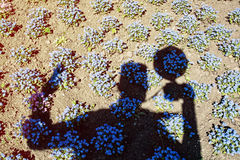 Photographer's shadow and Forget-me-not flowers in the park. Silhouette of man. Myosotis sylvatica. Photography theme. Blue flowers. Light and shadow Royalty Free Stock Photos