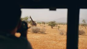 Photographer on safari in Africa takes pictures of a wild giraffe out of the car