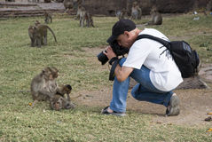 Photographer shoots Monkeys Royalty Free Stock Images