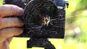 Photographer and spider close up stock video footage