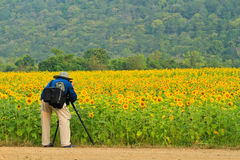 Photographer at sunflower field Royalty Free Stock Photos